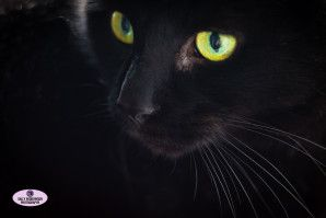 Black cat with green eyes close up