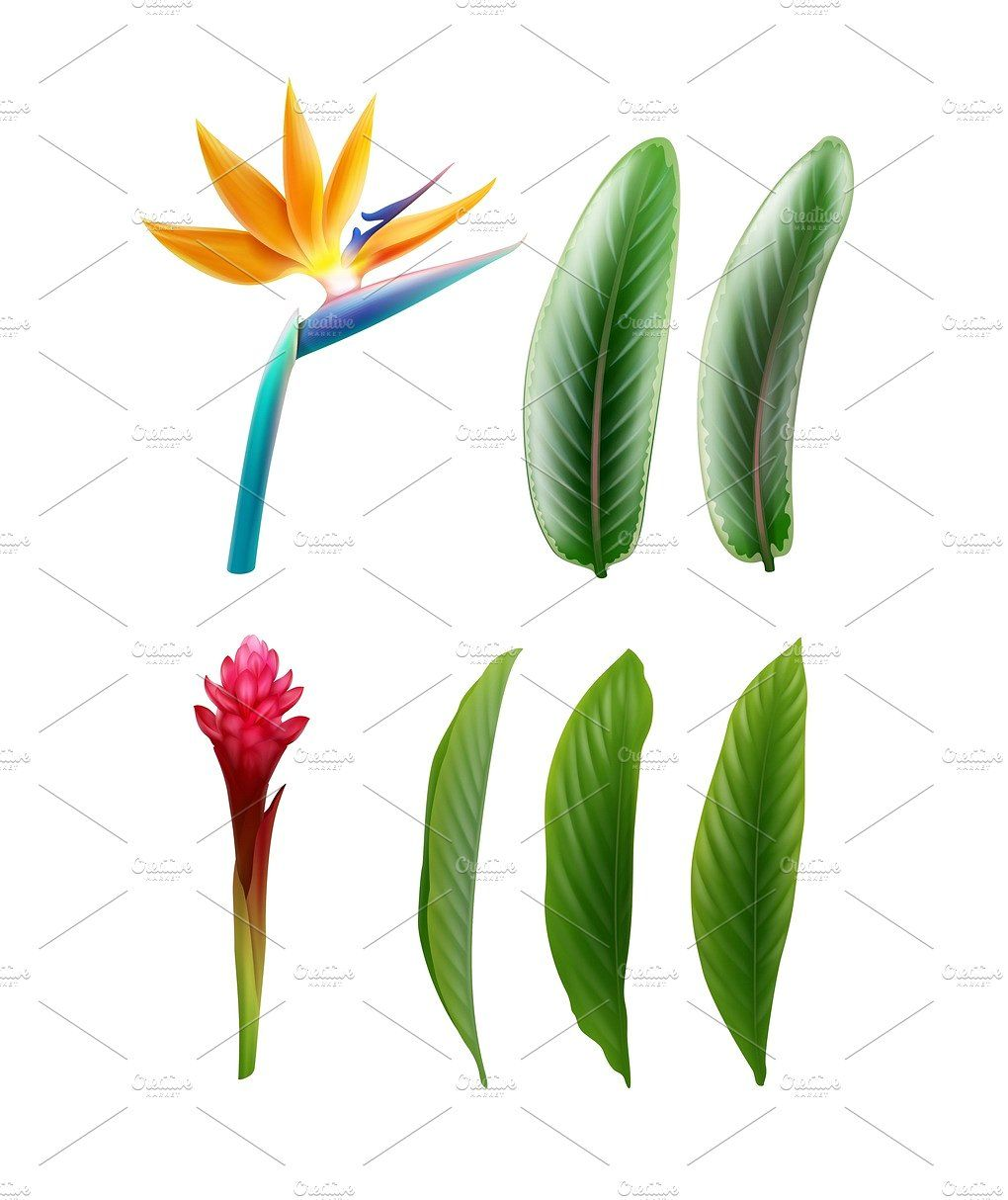 Bird Of Paradise And Red Ginger Birds Of Paradise Birds Of Paradise Flower Tropical Garden