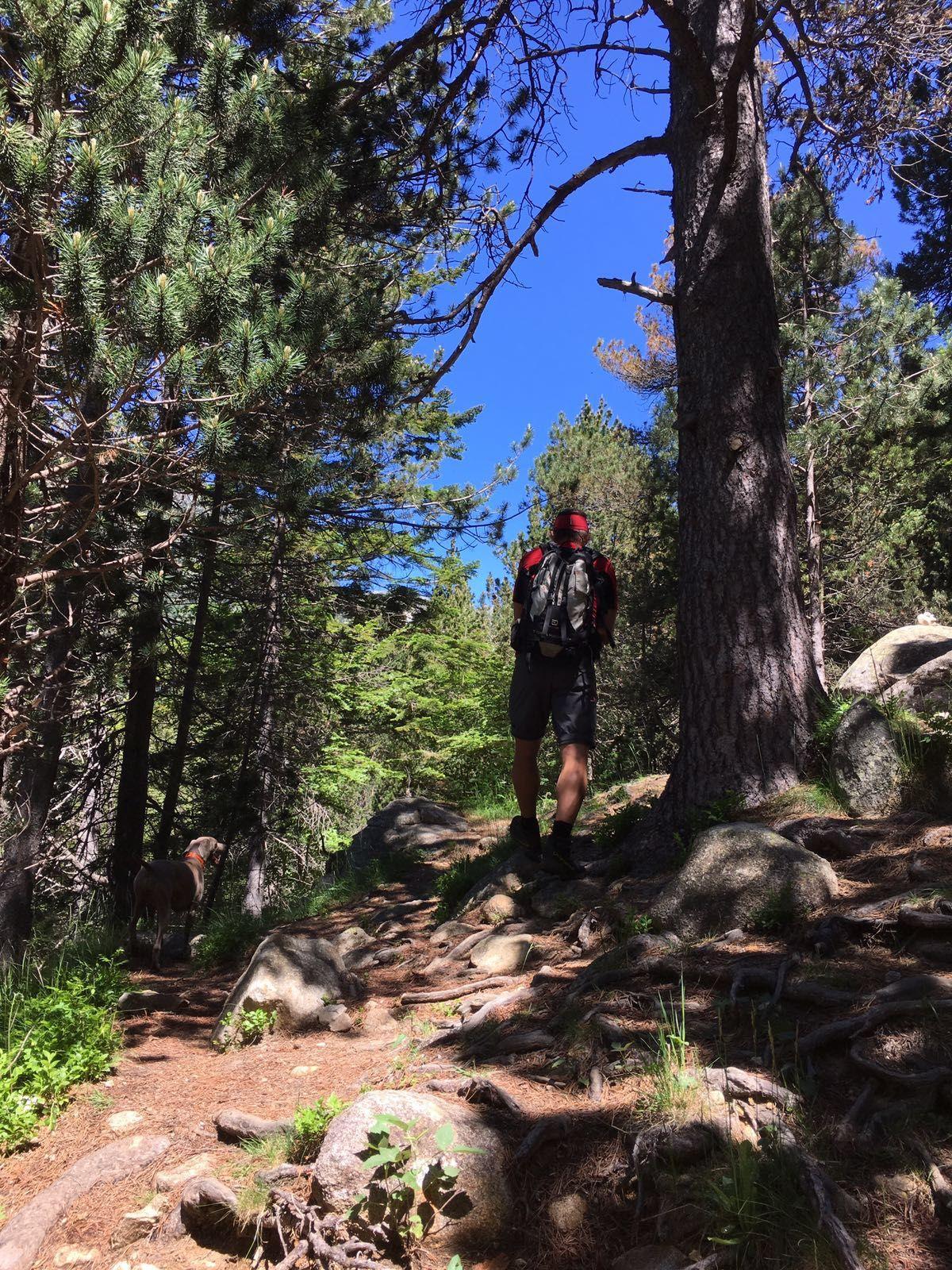 #senderismo en la #ValdAran #ValledeAran #Pirineos #PirineudeLLeida #bosque #montaña #mountain #hiking