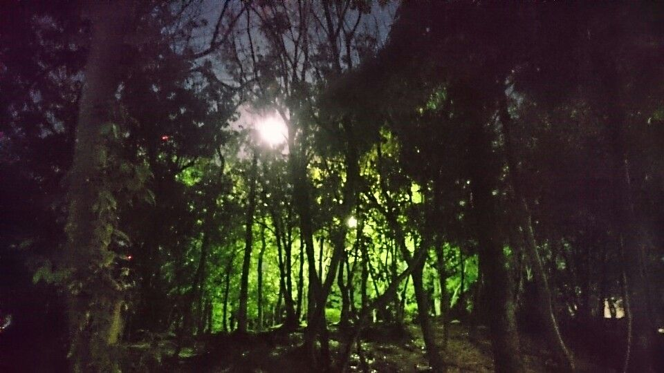 The full moon in the park