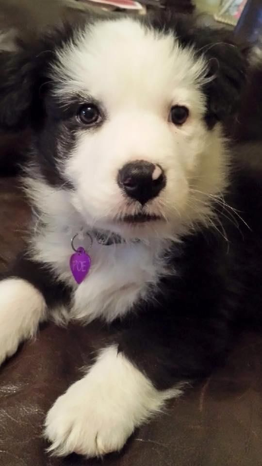 Adopt Poe Available To Meet From 4 6 On Dogs Cute Puppies