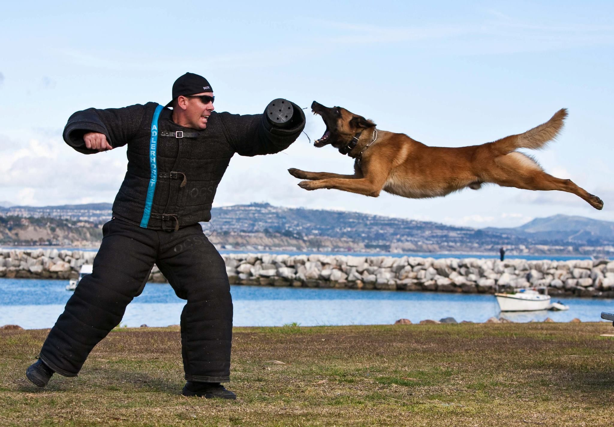 Police K9 Dog Unit Its A Leap Of Faith Awesome Photo