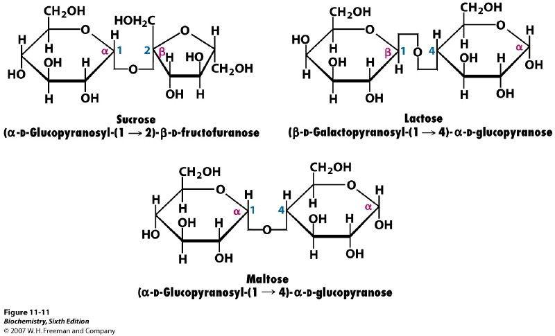 Glycosidic bonds between monosaccharides give rise to glycosidic bonds between monosaccharides give rise to oligosaccharides and polysaccharides the simplest oligosaccharides the ccuart Choice Image