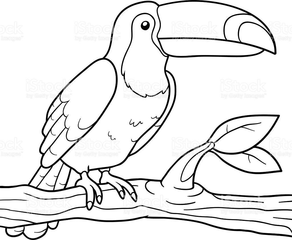 Desenhos De Animais Para Colorir: Resultado De Imagem Para Tucano Para Colorir