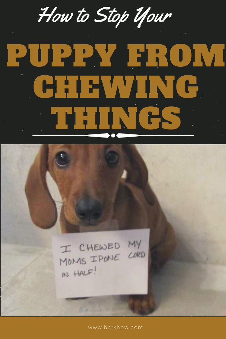 How to stop your puppy from chewing things puppies