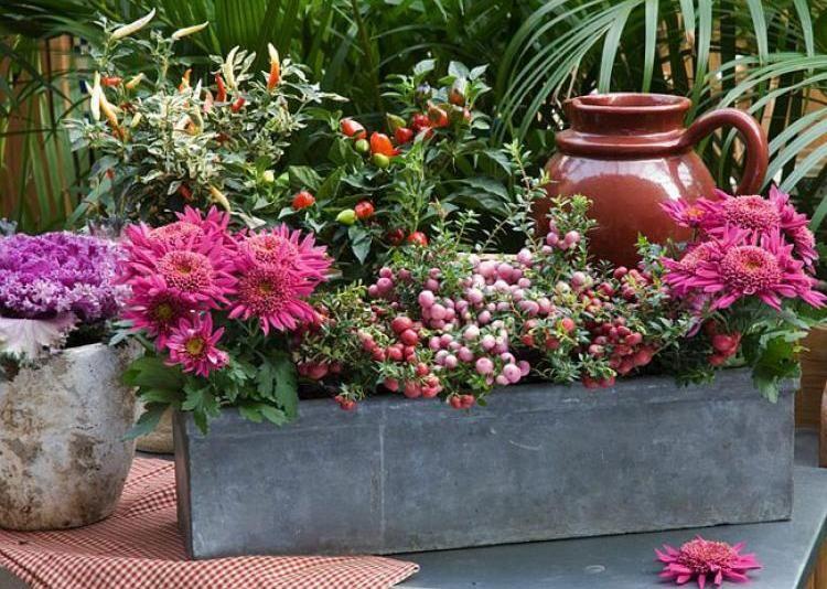 Fleurs pour jardinieres exterieures - Fleur de jardiniere ...