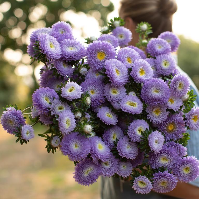 China Aster Harlekin Violet Flower Farm Flower Seeds Flowers