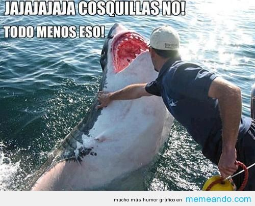 Memes Para Facebook En Espanol Memeando Com Tiburones Divertidos Tiburones Chiste Meme