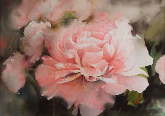 Pivoine Peony By Daniele Fabre France Art Floral Aquarelle Rose