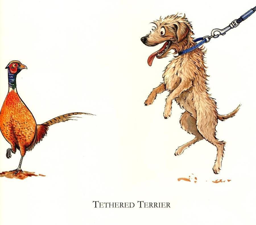 Country Humour Shooting Mounted Cartoons ....'Tethered