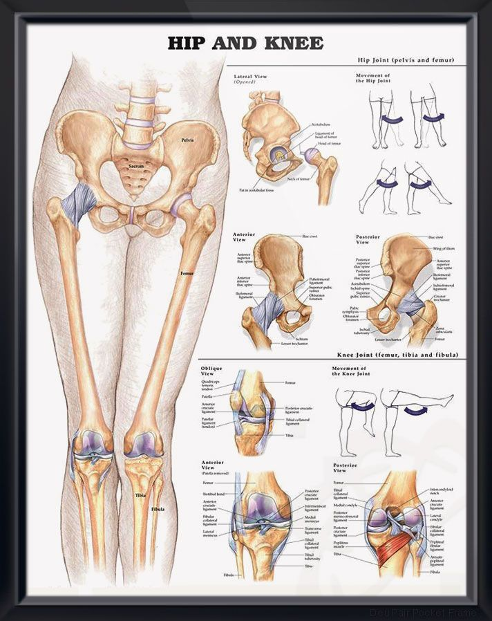Hip And Knee Chart 20x26 Medanatomyphysiologyhealth Pinterest