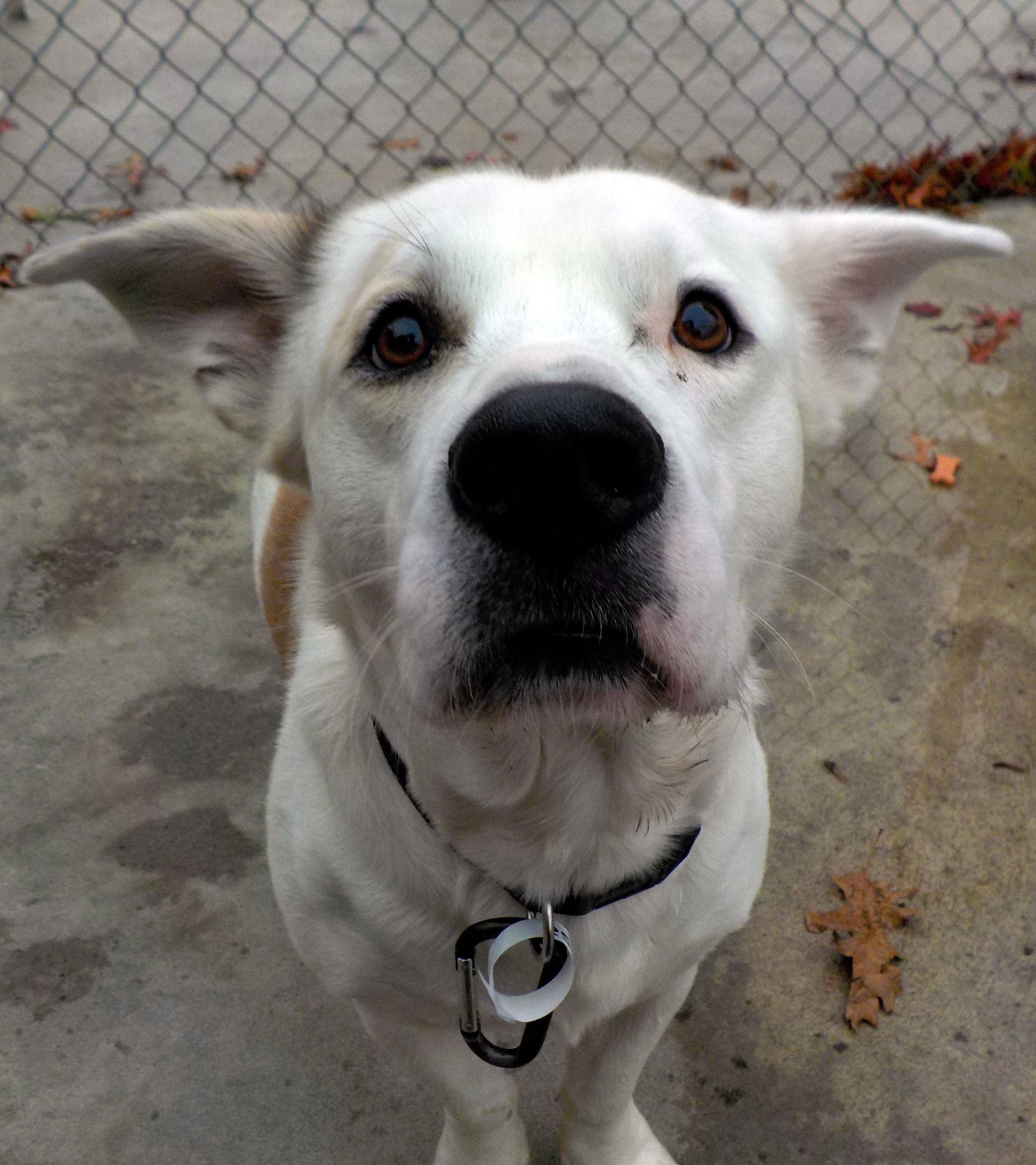 Adopt 25 Stimpy/Adopted on (With images) Pets, Pet life