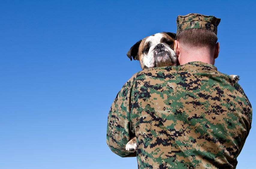 Soldier And His Dog Military Working Dogs Service Dogs