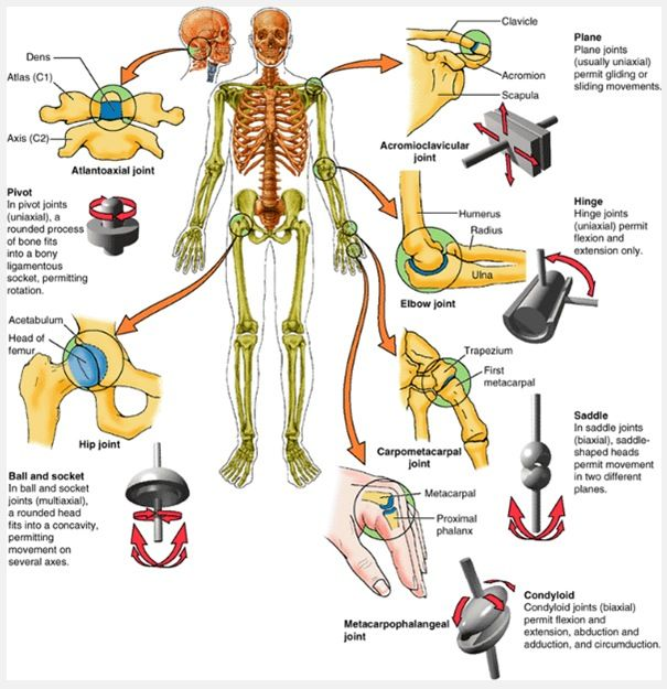 Good info on types of joints...think of how you move, hold, and ...