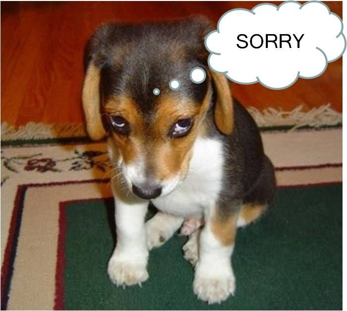Im sorry cute puppy amazing resilient animals pinterest im sorry cute puppy voltagebd Image collections