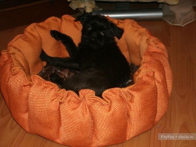 Делаем лежак для кошки своими руками ( фото) Кот Pinterest 72