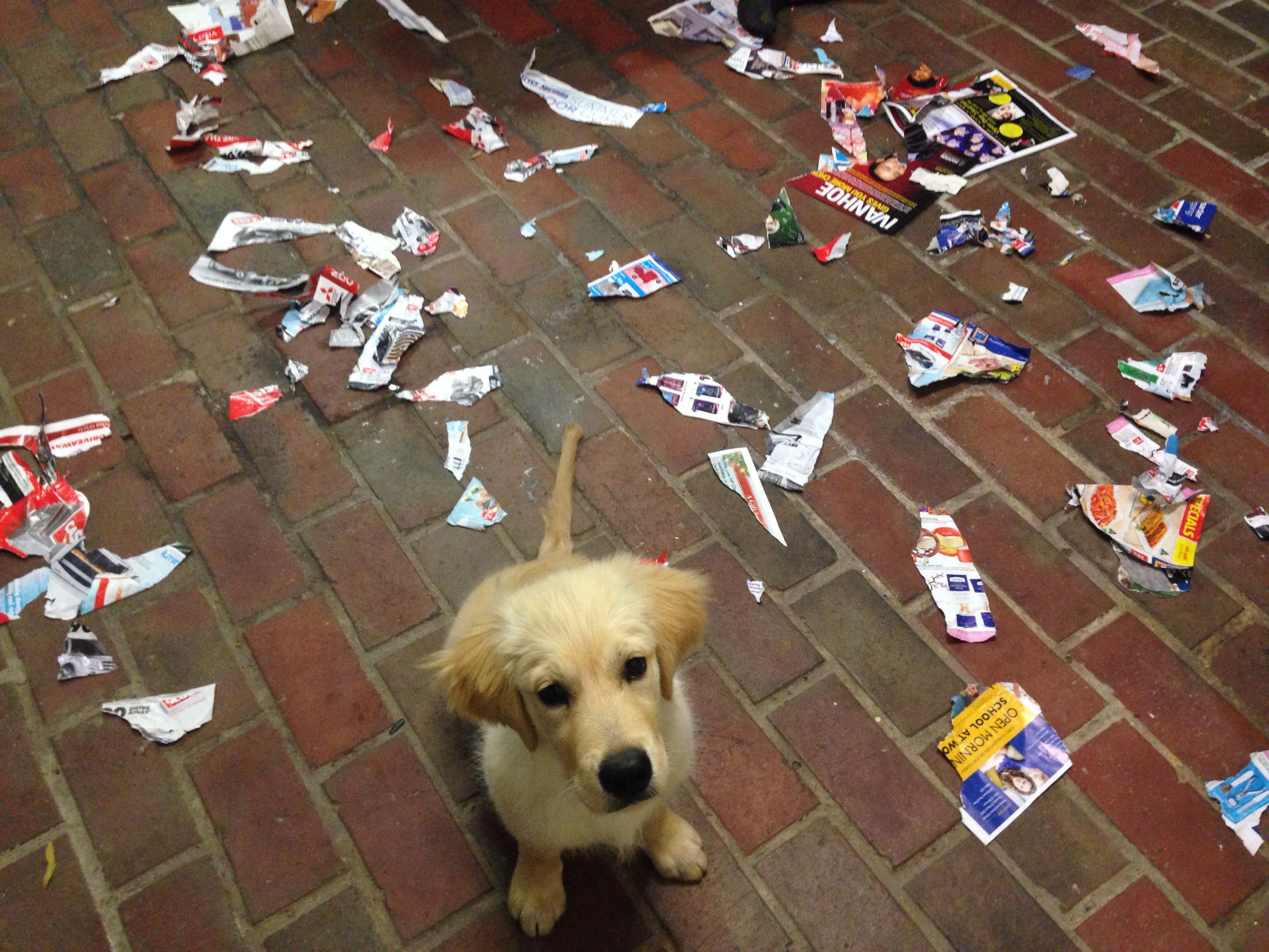 I Was Reading A Magazine And It Exploded All Of Sudden I Am Just As Surprised As You Are Hooman Your Dog Animal Antics Dogs