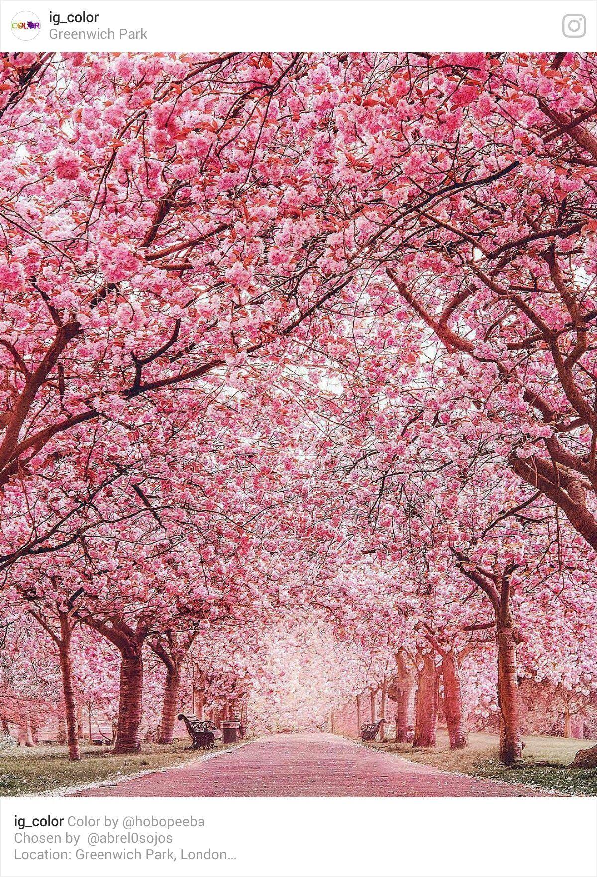 Pin By Diy All Season Fun And Food Fr On Sakura Pink Blossom Tree Nature Landscape