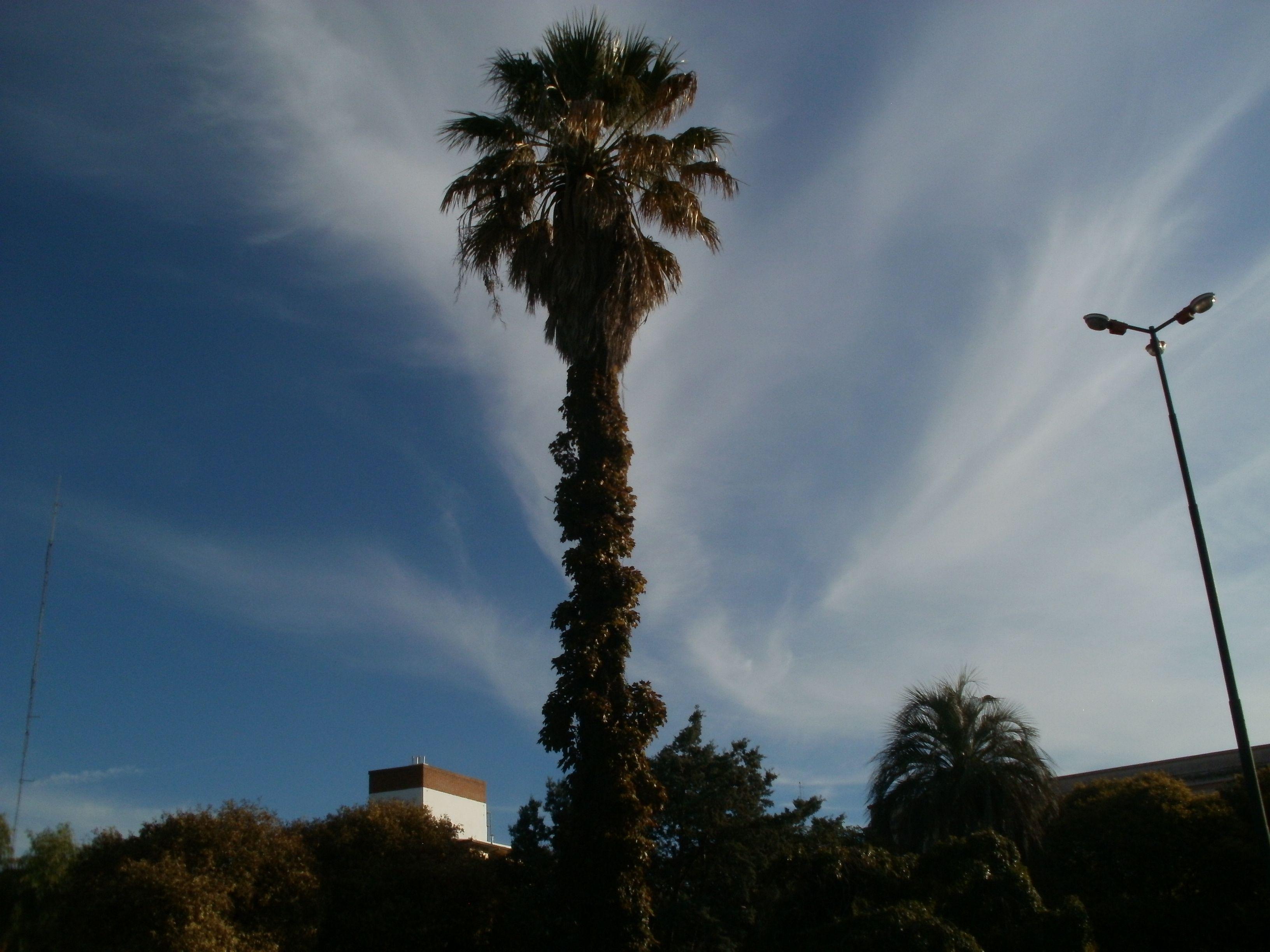 Ésta foto sigue siendo una de mis favoritas. El efecto de las nubes es  espectacular #palmera #naturaleza #nature #fotografia #photography #plaza #edificios #nubes #cielo