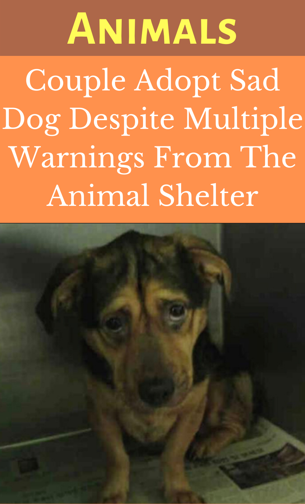 13 Year Old Girl S Site Finds Your Perfect Shelter Dog Match Shelter Dogs Dog Match Dogs