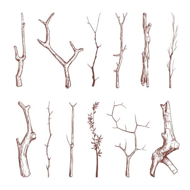 Hand drawn wood twigs, wooden sticks, tree branches vector rustic...