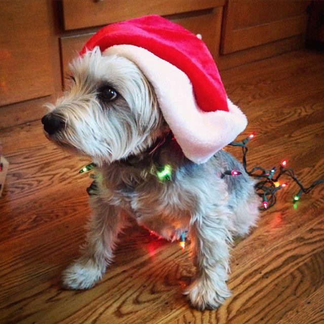 Adorable Pet Travel Photos Cute Animals Pet Travel Christmas Animals