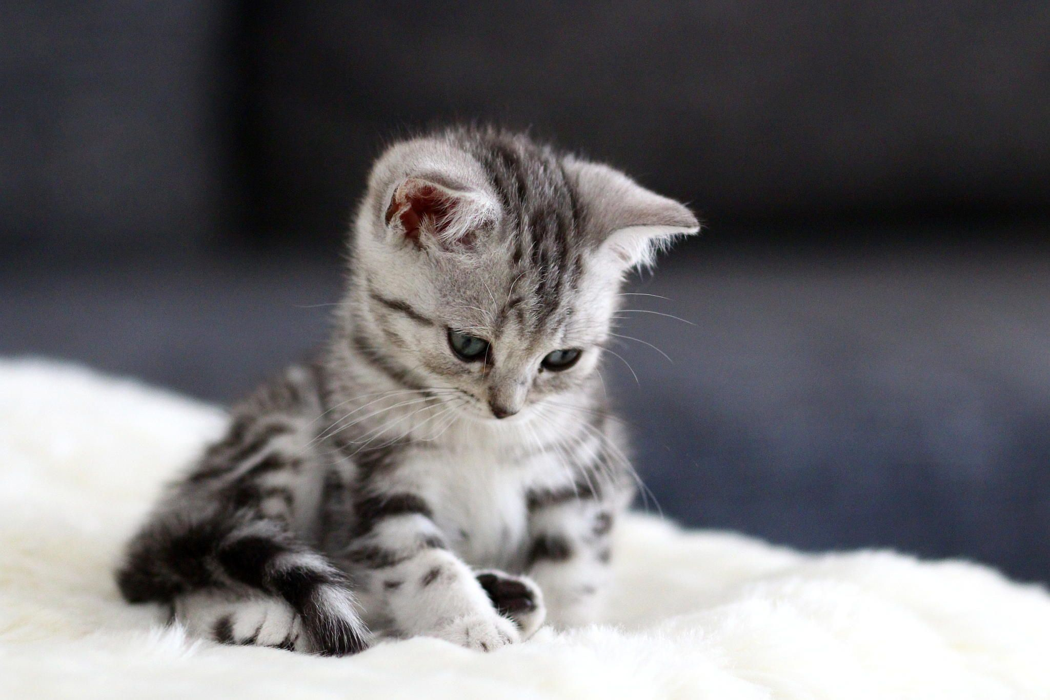 Photograph Kitten by Maurice S. on 500px