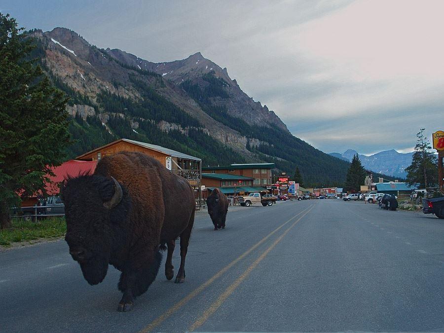 Cooke City Montana Favorite Places Amp Spaces Pinterest