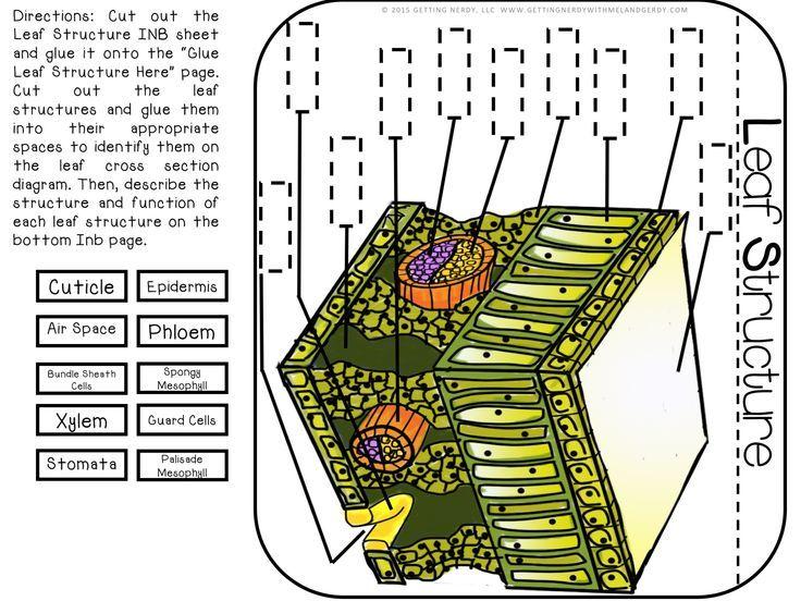 Label Sponge Cross Section Diagram Electrical Wiring Diagram