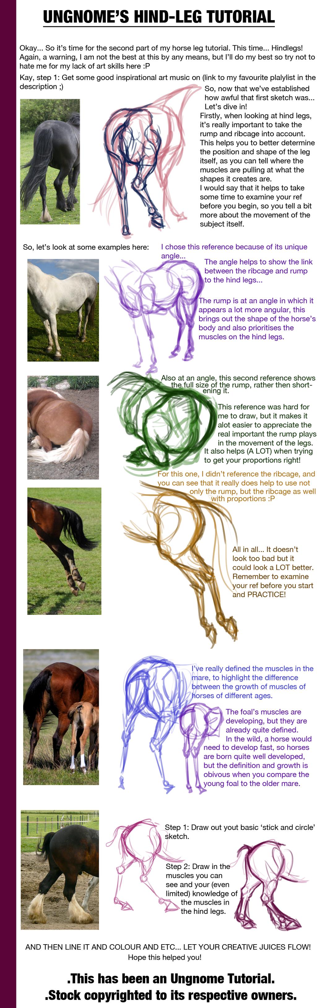Hind-Leg Anatomy Tutorial by Ungnome.deviantart.com on @deviantART ...