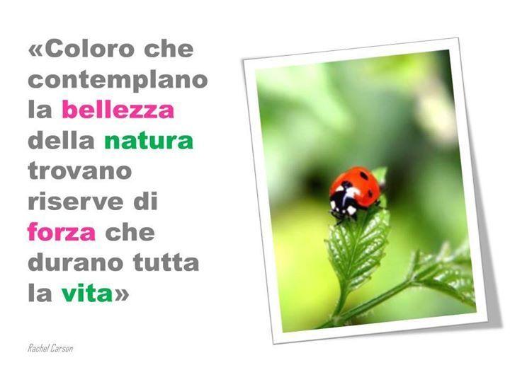 La Bellezza Della Natura Con Immagini Salute E Benessere Info Grafiche Salute
