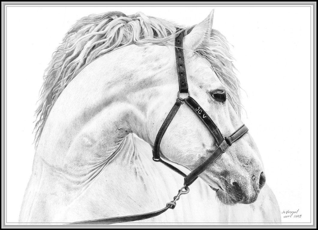 Cheval de r ve un dessin de cheval blanc en noir et gris projects to try horses - Tete de cheval a imprimer ...