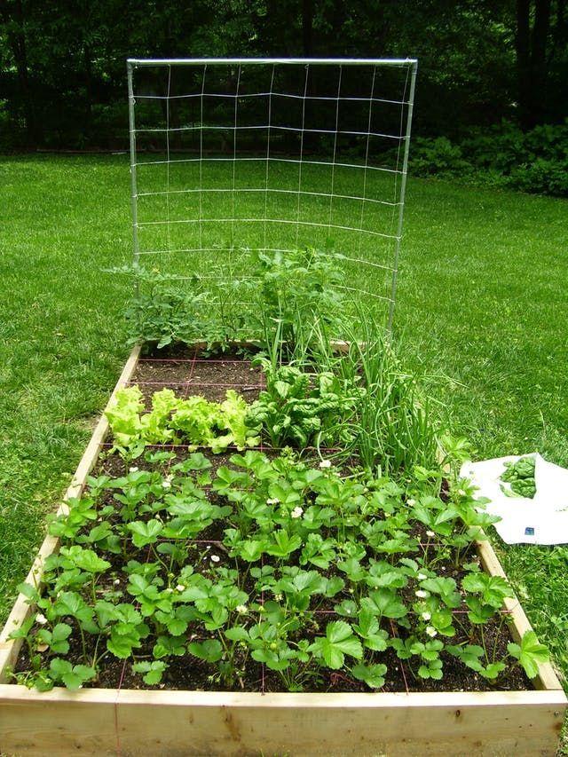 Square Foot Gardening - Planning, Spacing, Benefits | Apartment ...