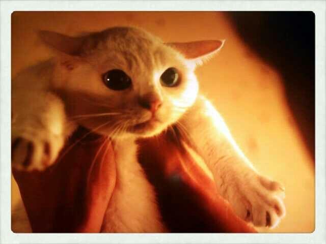 たまりませぬ。  『玉之丞さまかわいい~ : 猫侍の【玉之丞さまがかわいすぎる♡】画像&動画集 - NAVER まとめ』