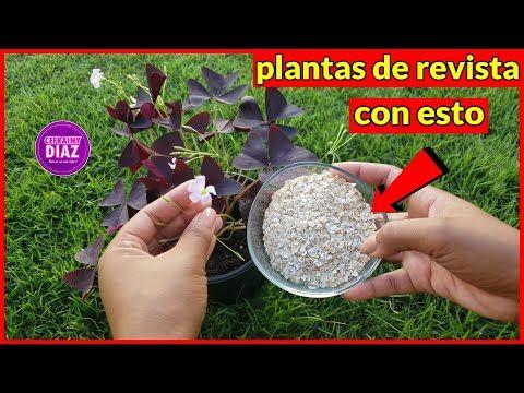 Echa esto a tus plantas y te prometo que te lo agradecerán con una floración y follaje impresionante - YouTube