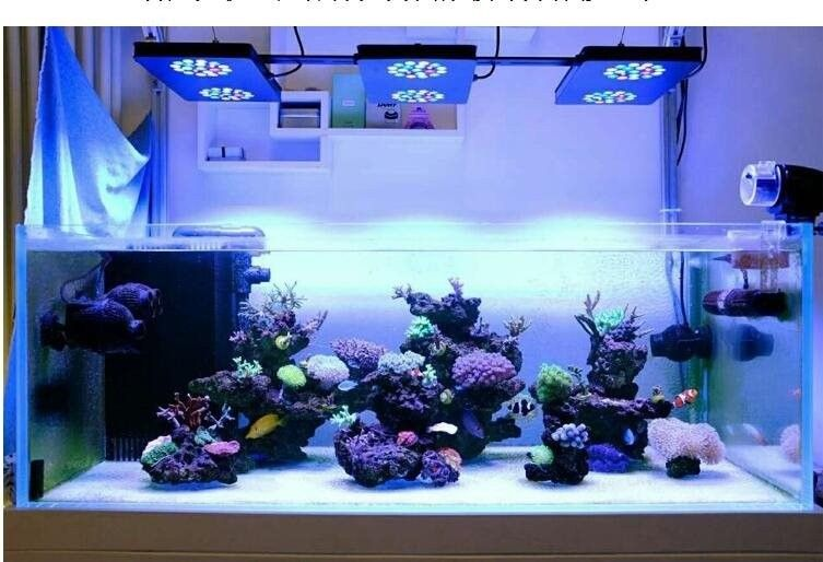 Minimalist aquascaping, clean and desirable.