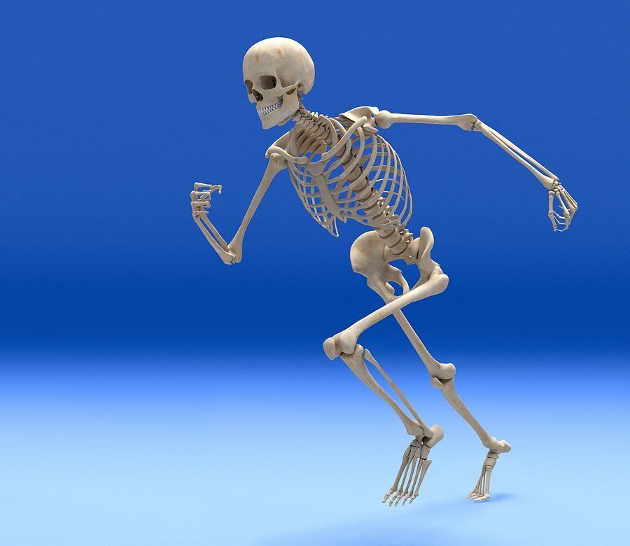 Скелет в картинках