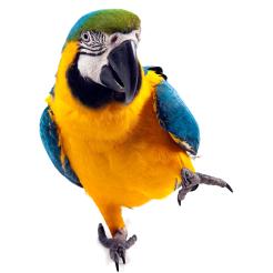 Parronting Styles With Parrots Pet Birds By Lafeber Co Parrot Pet Pet Birds Parrot