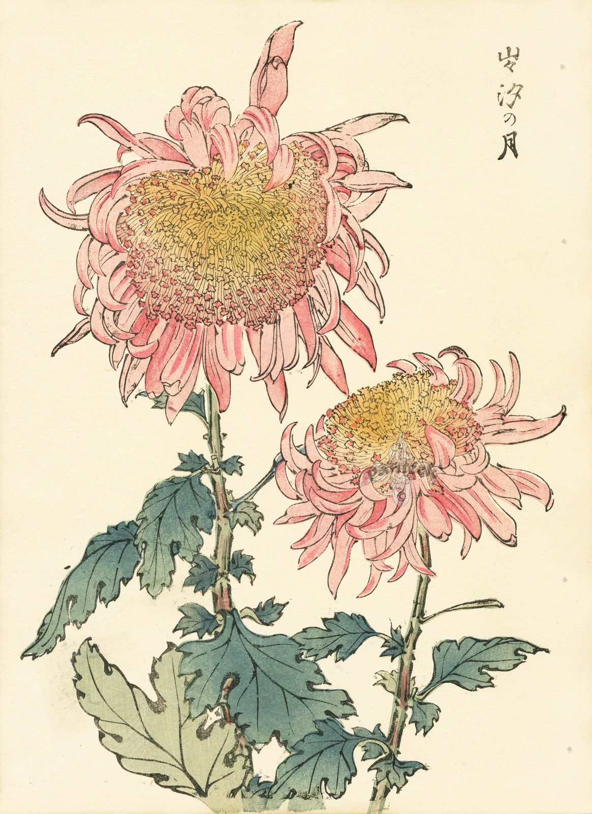 Keika Hasegawa Chrysanthemum Wood Block Prints 1893 Grabados Botanicos Arte Japones Dibujos