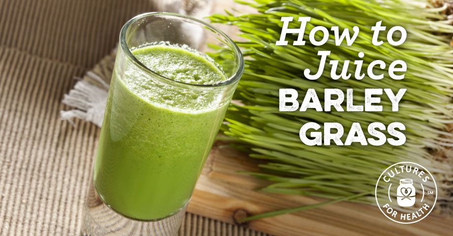 How To Juice Barley Grass Wheatgrass benefits