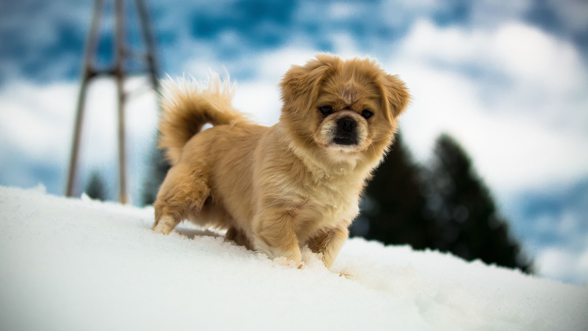 Little Puppy in Snow Wallpaper Puppy pictures, Puppies