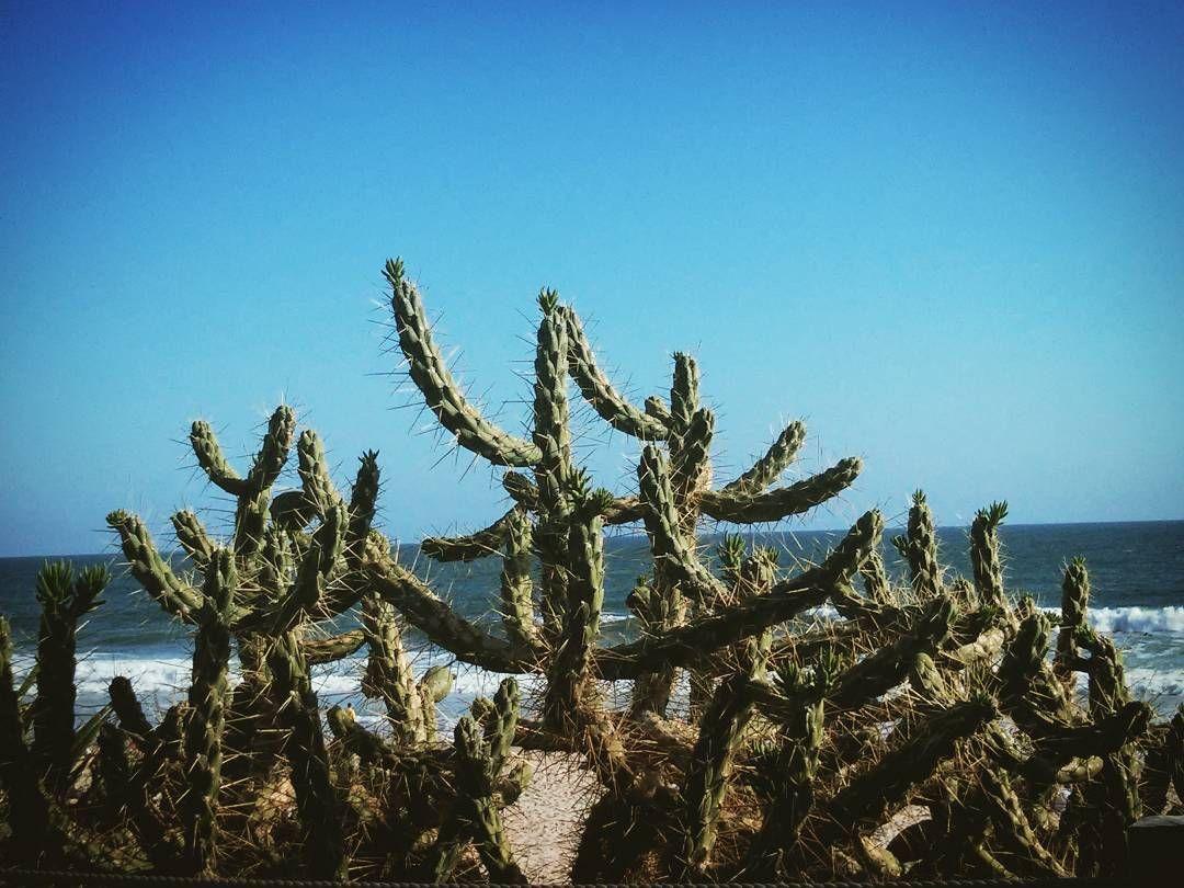 Carcavelos beach  #cactus #beach #water #sea #sand #sky #sun #beautiful #nature #nofilter #picoftheday #instagood #plants #lisbon #Portugal #cascais by vasco_gama