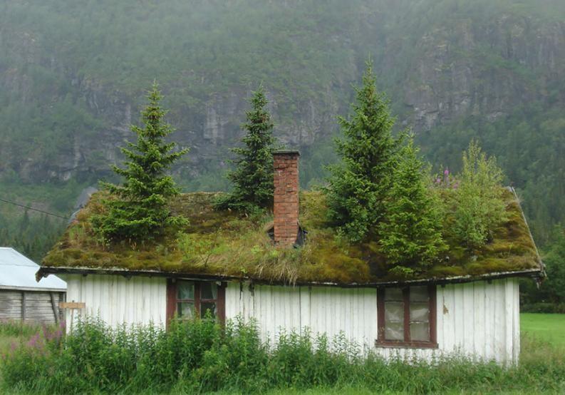 Északi házak zöld tetővel | Fotó via boredpanda.com