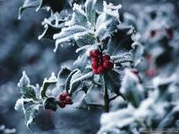 winter berries - Google Search