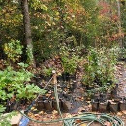 How To Start A Backyard Nursery
