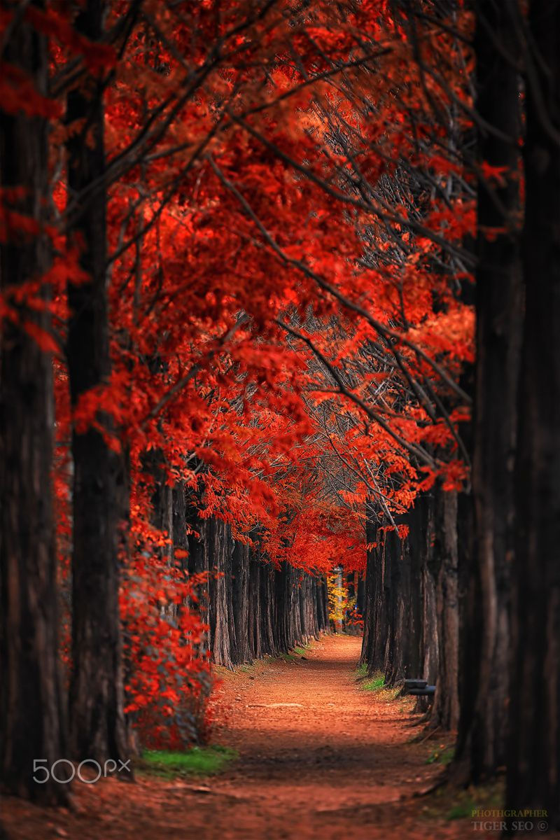 Fall Heart Leaves Background Wallpaper Red Road Autumn After The Rain Korea By Tiger Seo