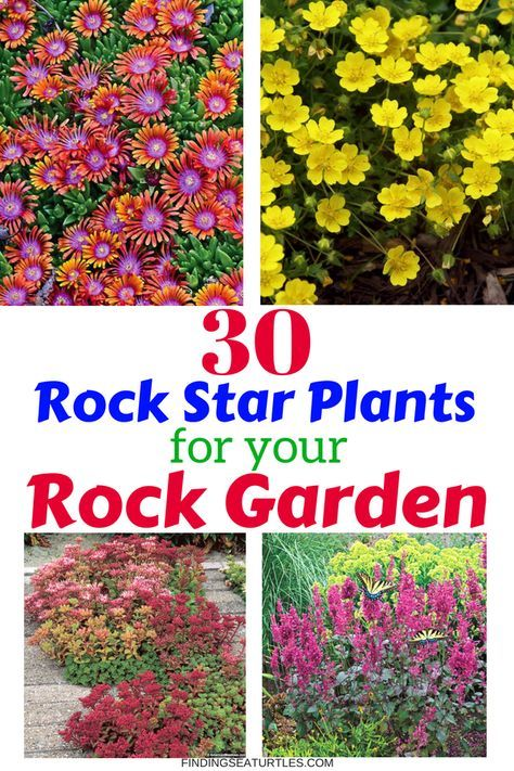 30 Rock Garden Plants That Perform Like Rock Stars! is part of Rock garden plants, Rock garden design, Rock plants, Rock garden, Rock garden landscaping, Plants - soil is not ideal with a rocky landscape  If you have a rocky landscape that is a challenge to grow plants in, consider planting rock garden perennials