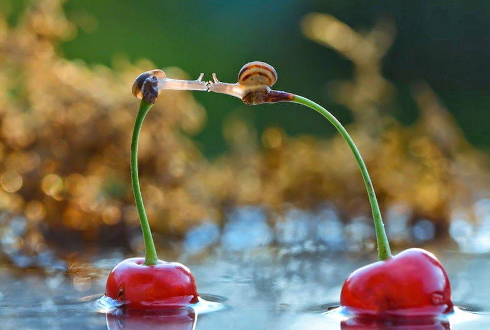 El inestable beso de dos caracoles sobre los pedúnculos de dos cerezas