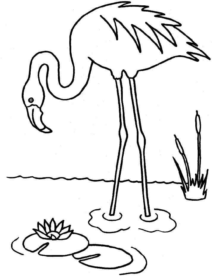 dessin flamand rose (avec images) | Flamant rose dessin ...