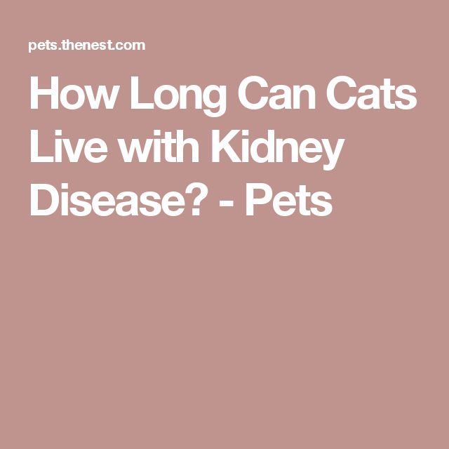 How Long Can Cats Live With Kidney Disease Kidney Disease Kidney Friendly Foods Disease
